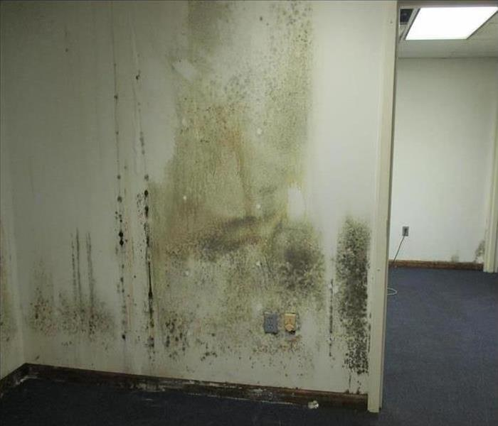 Mold Damage – Buffalo Grove Commercial Building Before