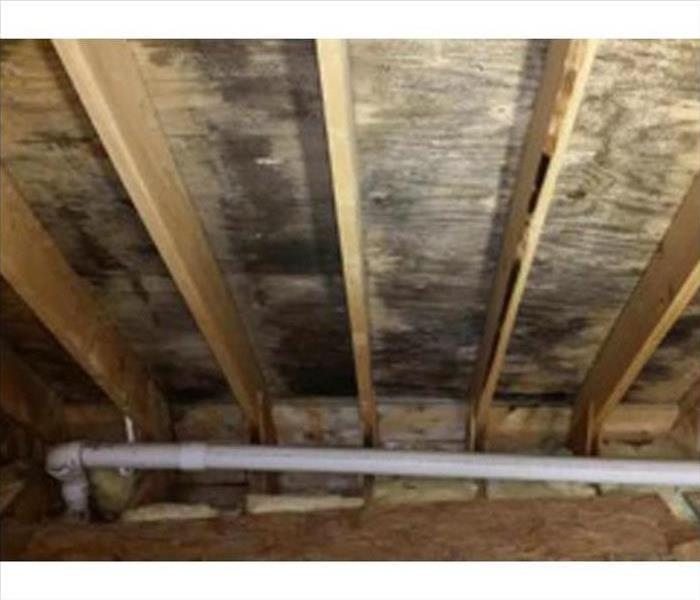 Mold Damage – Lake Zurich Home Before
