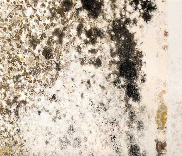Mold Remediation Removing Mold Damage in Lake Zurich Homes